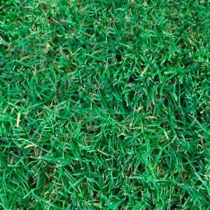 Brisbane Turf Sales Installations The Great Lawn Co